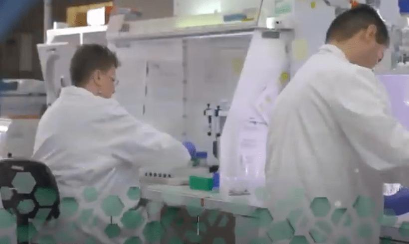 Naukowcy Badają Konopie Jako Potencjalny Sposób Zapobiegania COVID-19